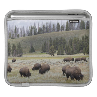 Bison in the Hayden Valley of Yellowstone Sleeves For iPads