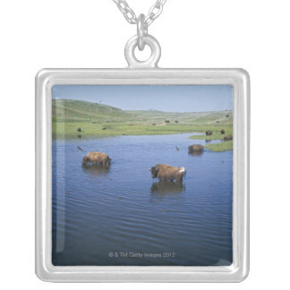 Bison In The Water With Numerous Cliff Swallows Silver Plated Necklace