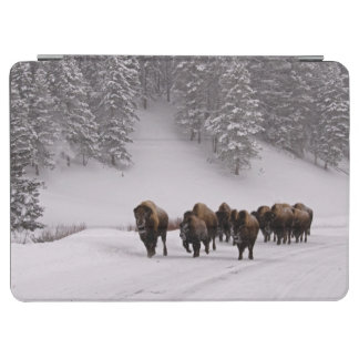 Bison in Winter iPad Air Cover