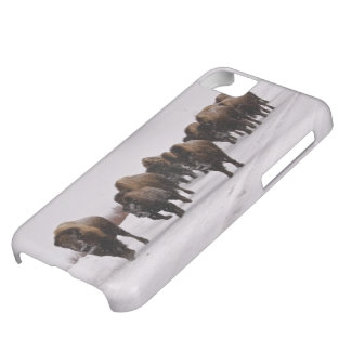 Bison in Winter iPhone 5C Case