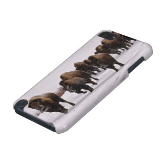 Bison in Winter iPod Touch 5G Case