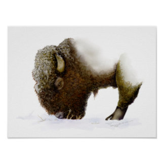 Bison In Winter Poster