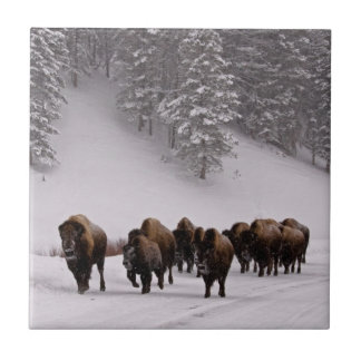 Bison in Winter Small Square Tile