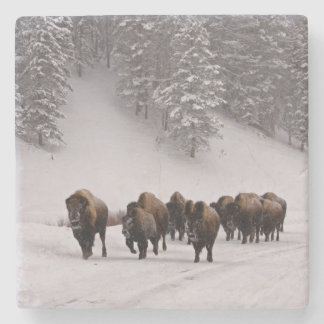 Bison in Winter Stone Coaster