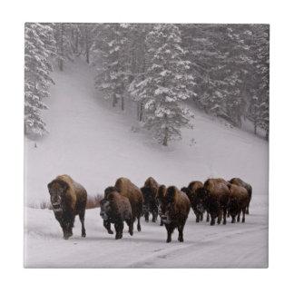 Bison in Winter Tile