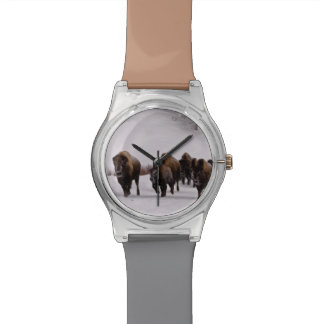 Bison in Winter Watch