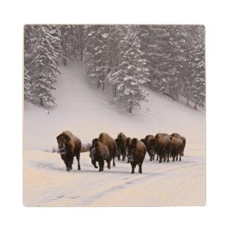 Bison in Winter Wood Coaster