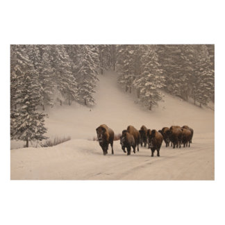 Bison in Winter Wood Wall Art