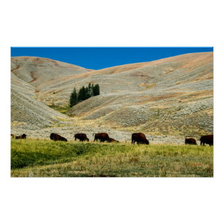 Bison in Yellowstone Park Print