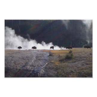 Bison in Yellowstone Poster