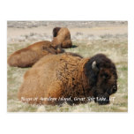 Bison of Antelope Island Postcard