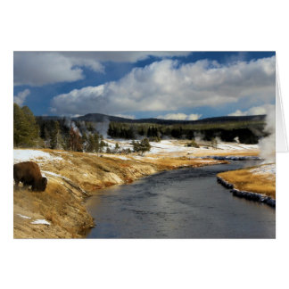Bison On The Firehole Greeting Card