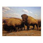 Bison Post Card