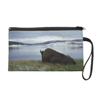 Bison Resting By Yellowstone River With Snow On Wristlet Clutch
