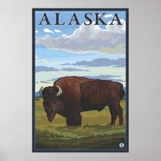 Bison Scene - Alaska Poster