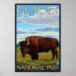 Bison Scene - Glacier National Park, MT Poster