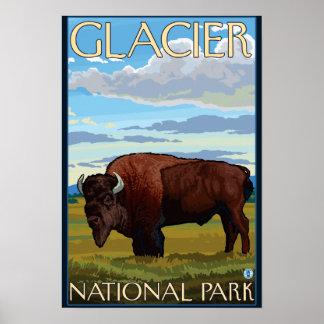 Bison Scene - Glacier National Park, MT Print