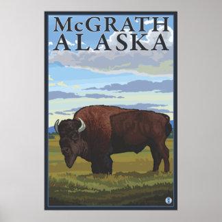 Bison Scene - McGrath, Alaska Poster