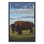 Bison Scene - Yellowstone National Park Poster