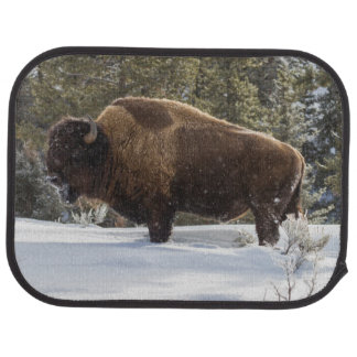Bison standing in snow car mat