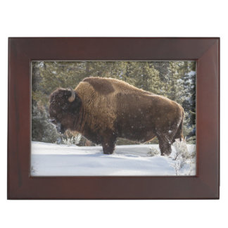 Bison standing in snow keepsake box