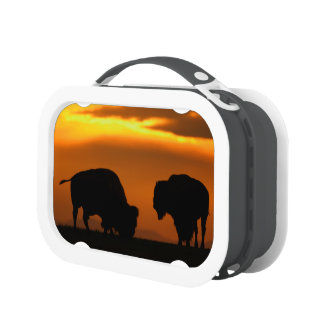 bison sunset lunchboxes