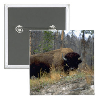 Bison, Upper Geyser Basin, Yellowstone National Pa 15 Cm Square Badge