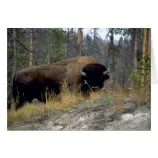 Bison, Upper Geyser Basin, Yellowstone National Pa Greeting Card