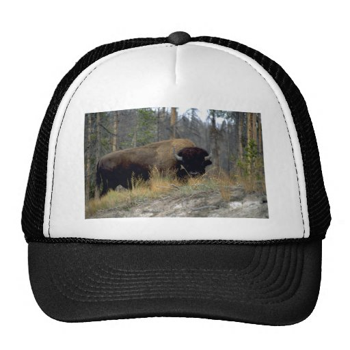 Bison, Upper Geyser Basin, Yellowstone National Pa Mesh Hat
