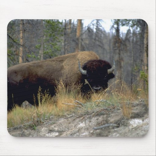 Bison, Upper Geyser Basin, Yellowstone National Pa Mousepads