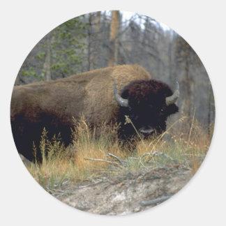 Bison, Upper Geyser Basin, Yellowstone National Pa Round Sticker