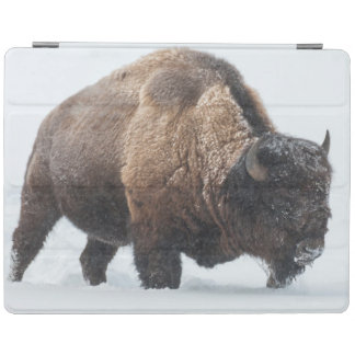 Bison walking in snow iPad cover