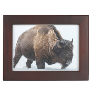 Bison walking in snow keepsake box