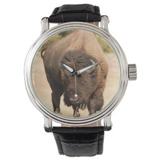 Bison Watch