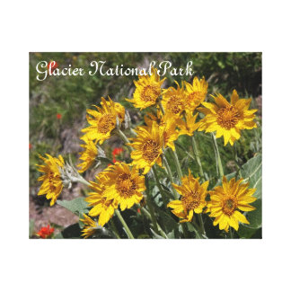 Bitter root flowers in Glacier national Park Canvas Print
