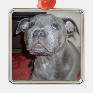 Bkue_Staffordshire_Bull_Teerier_Puppy, Silver-Colored Square Decoration
