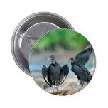 Black American vultures Panama coast 6 Cm Round Badge