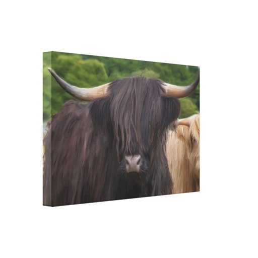Black And Blonde Highland Cattle Oil Painting Stretched Canvas Print