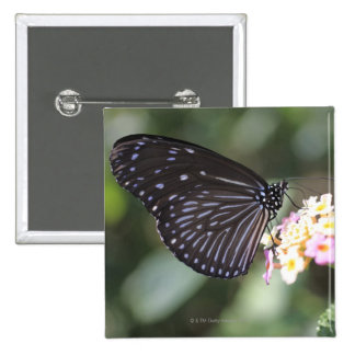 Black and blue butterfly on flower 15 cm square badge