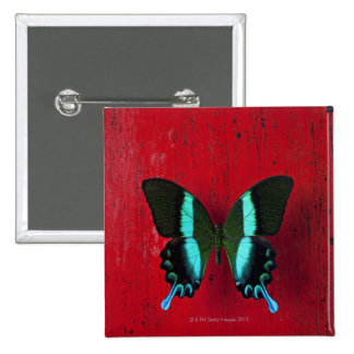 Black and blue butterfly on red wall 15 cm square badge