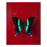 Black and blue butterfly on red wall poster