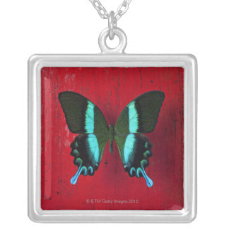 Black and blue butterfly on red wall silver plated necklace
