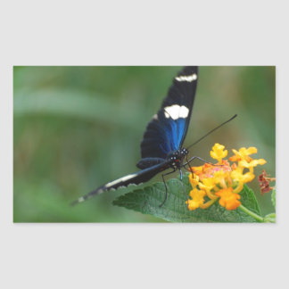 Black and Blue Butterfly Stickers