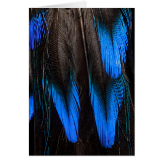 Black And Blue Feather Abstract Card