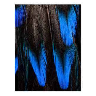 Black And Blue Feather Abstract Postcard