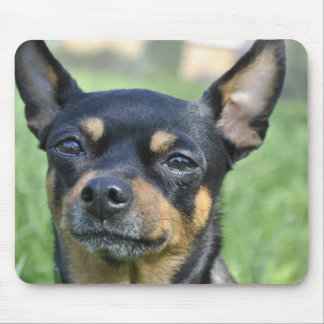 Black and Brown Chihuahua Mouse Pad