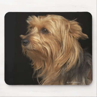 Black and brown Yorkie left profile on black Mouse Mat