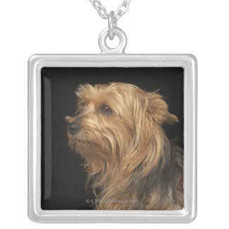 Black and brown Yorkie left profile on black Silver Plated Necklace