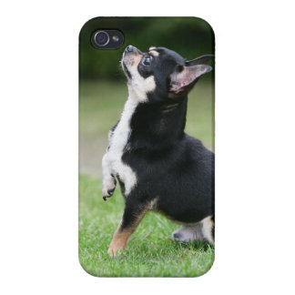 Black and Cream Chihuahua Covers For iPhone 4