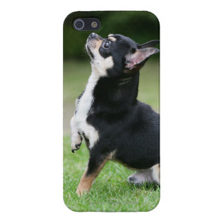 Black and Cream Chihuahua iPhone 5 Cover